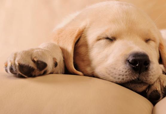 Fatigue Tips: Rests