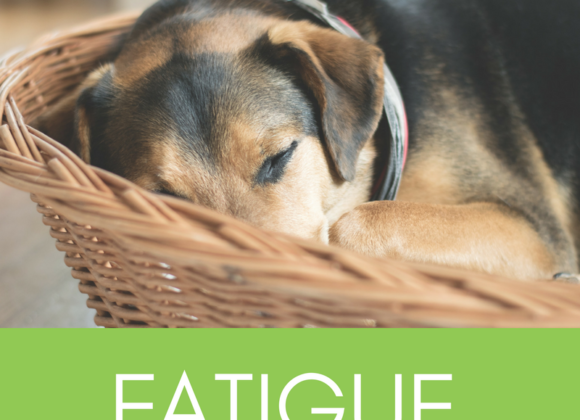 New Online Fatigue Management Course