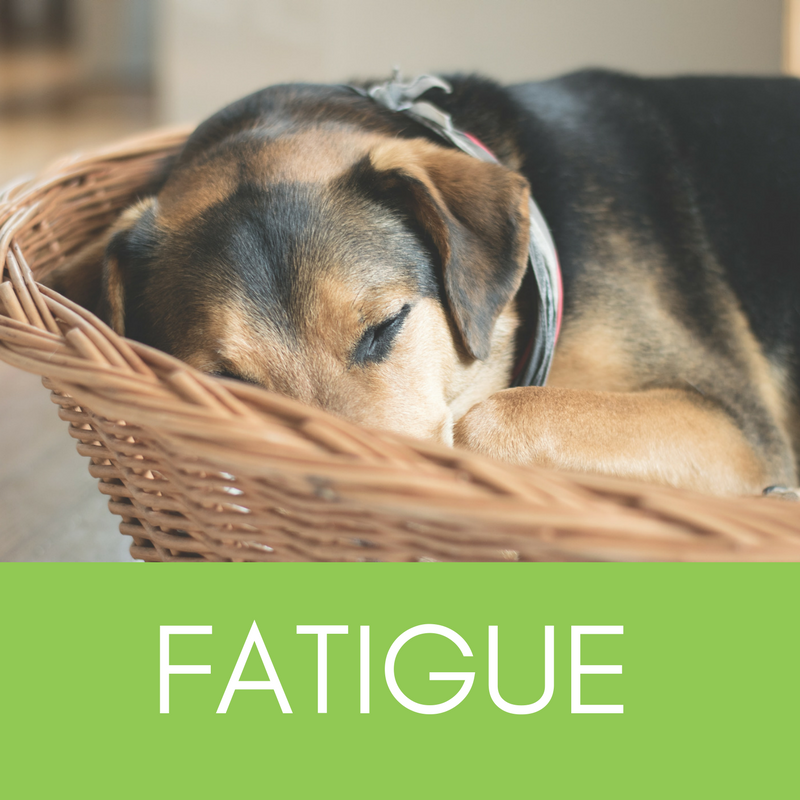 New Online Fatigue Management Course